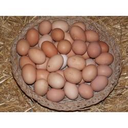 Oeufs extra frais fermiers , 2€00 les 6 , VEUILLEZ CHOISIR 6 , 12 , 18 , etc... SVP