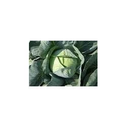 * Choux vert , vendu à la piece et au poids (environ 1 kg ) , 2€20 le kg