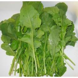* Salade roquette , 1€20 les 100grs