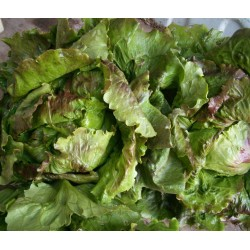 Salade  , 1€20 piece